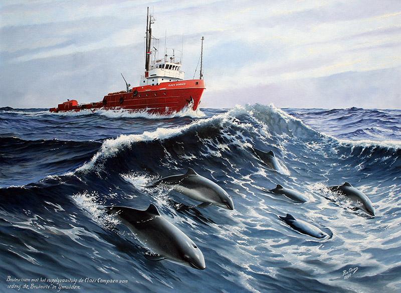 Bruinvissen voor de Claes Compaen
