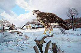 Buizerd in winterlandschap