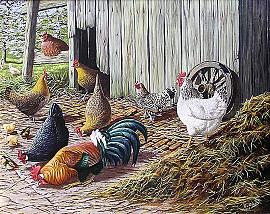 Kippen en kuikens