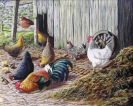 Kippen, haan en kuikens
