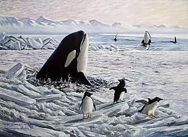 Orka's breken door het ijs