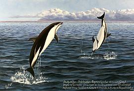 Dusky dolfijn
