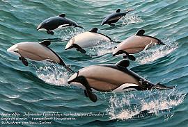 Hector dolfijn