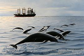 Noordelijke gladde dolfijn